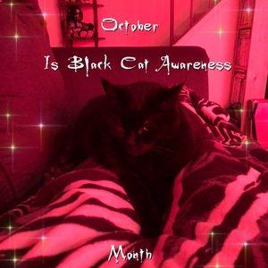 October is Black Cat Awareness month